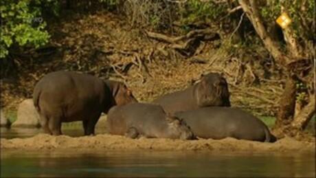 Freek op safari | Nijlpaarden/worstboomvrucht