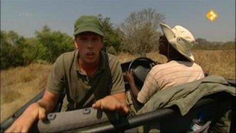 Freek op safari | Leeuwin redden