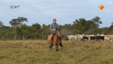 Freeks wilde wereld | Braziliaanse cowboys