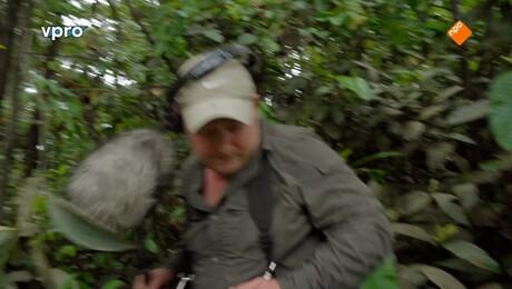 Freeks wilde wereld | Stofzuigers van de jungle