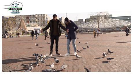 De brutale duif en andere dieren in de stad