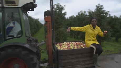 Het Klokhuis | Appels
