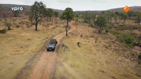 Freeks wilde wereld | Inspectie van een olifant