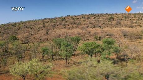 Freeks wilde wereld | Overleven op de savanne