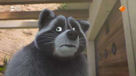 Ranzige wasberen