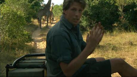 Freek in het wild | Giraffen