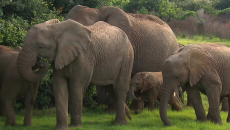 Freek in het wild | Verdoofde olifant