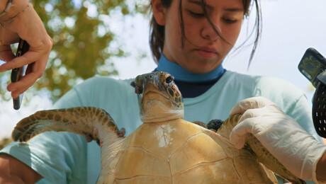 Julieta & de schildpadden in de plastic soep