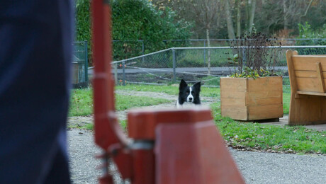 Puppy Patrol | Dapper Spoorloos