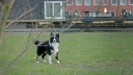 Puppy Patrol | Zwerver