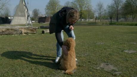 Kan Klaas een hondenbehendigheidswedstrijd winnen?