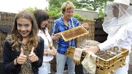 De Gilfactor | Kirsten en de bijen