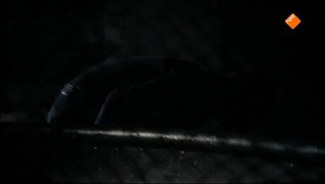 De Leeuwenkuil