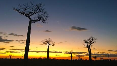 Madagaskar - Dag- en nachtdieren