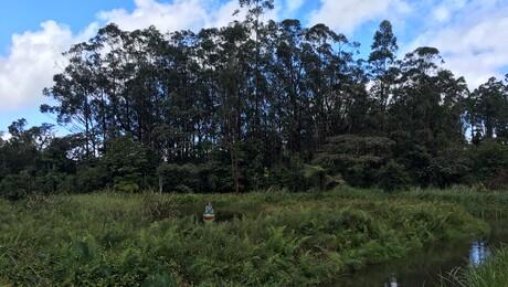Freeks wilde wereld | Madagaskar - Maki's