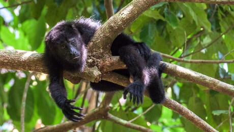 Freeks wilde wereld | Belize - Bommetje!