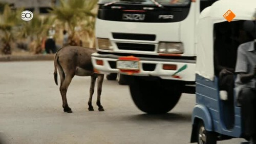 2Doc: Dead donkeys fear no hyenas