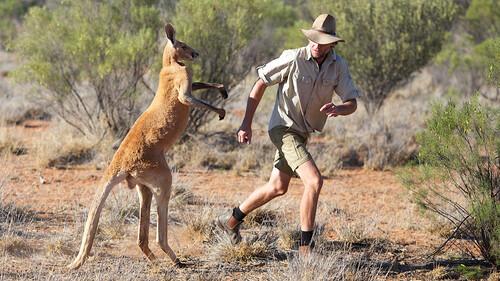 Kangaroo Dundee en andere dieren