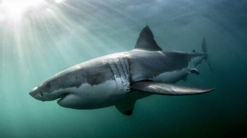 Natuur op 2: Shark Deel 1/2