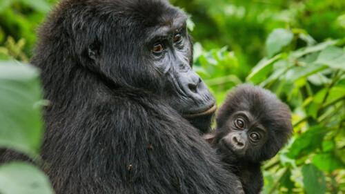 Natuur op 2: Animal super parents