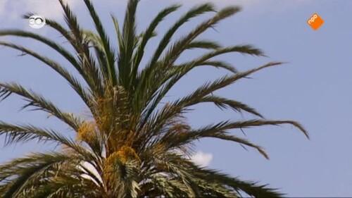 Spanje: Palma de Mallorca - Soler