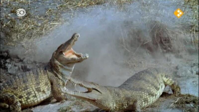 Natuur op 2: Krokodillen van Katuma