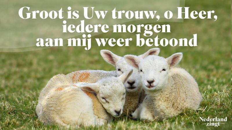 Nederland Zingt lied delen: Groot is Uw trouw
