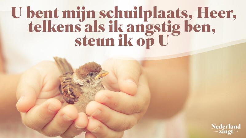 Nederland Zingt lied delen: U bent mijn schuilplaats