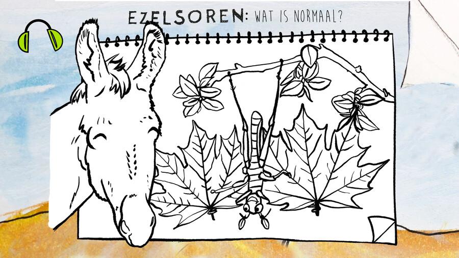 Ezelsoren - Wat is normaal?