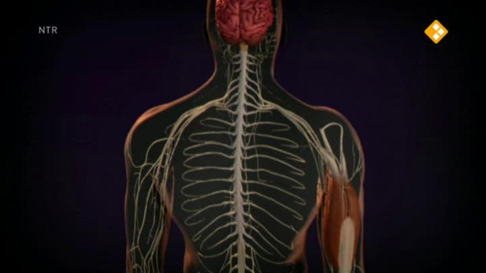 Bio-bits Onderbouw: Mens En Lichaam - Zenuwstelsel