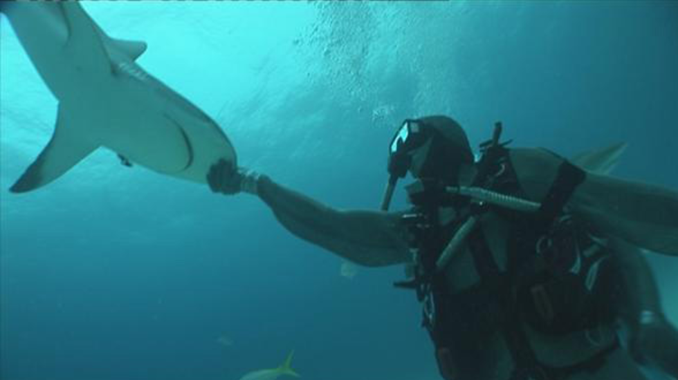 Tomtesterom - Hoe Hypnotiseer Ik Haaien?