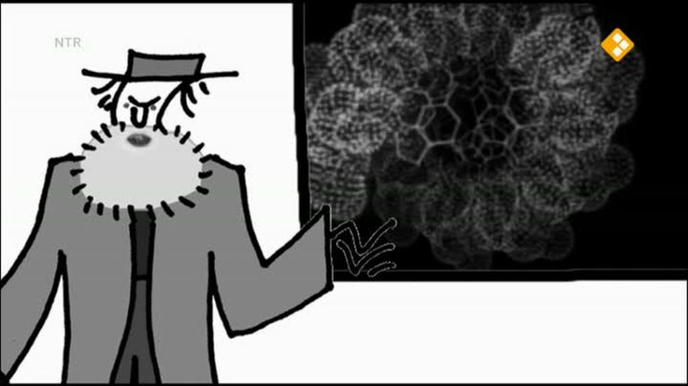 Bio-bits Bovenbouw: Evolutie - Argumenten Voor Evolutie