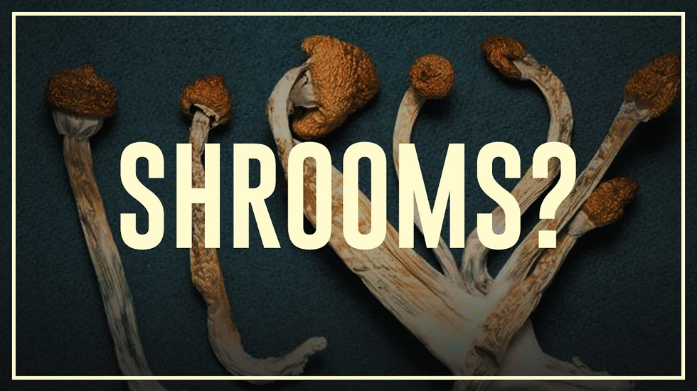 Afbeelding van Drugslab AFL. 7A | Paddo's (magic mushrooms) - do's en don'ts