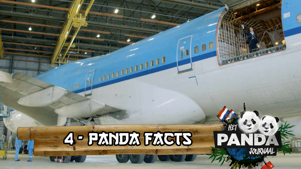 #4 Panda Facts | Pandajournaal