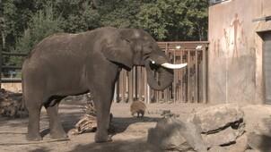 Het echte leven in de dierentuin