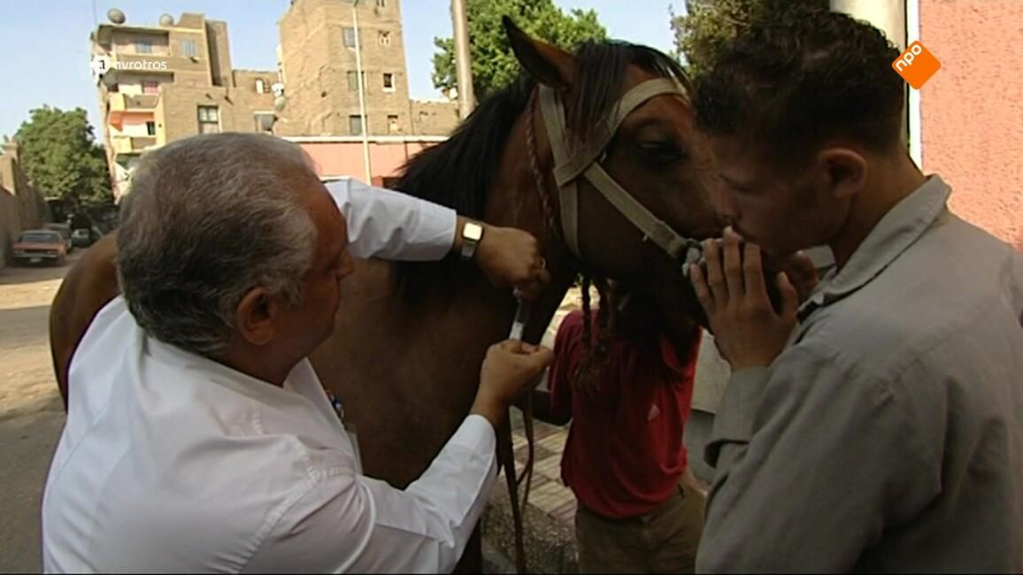 Dierenhelden In Egypte - Seizoen 1 Afl. 8 - Dierenhelden In Egypte